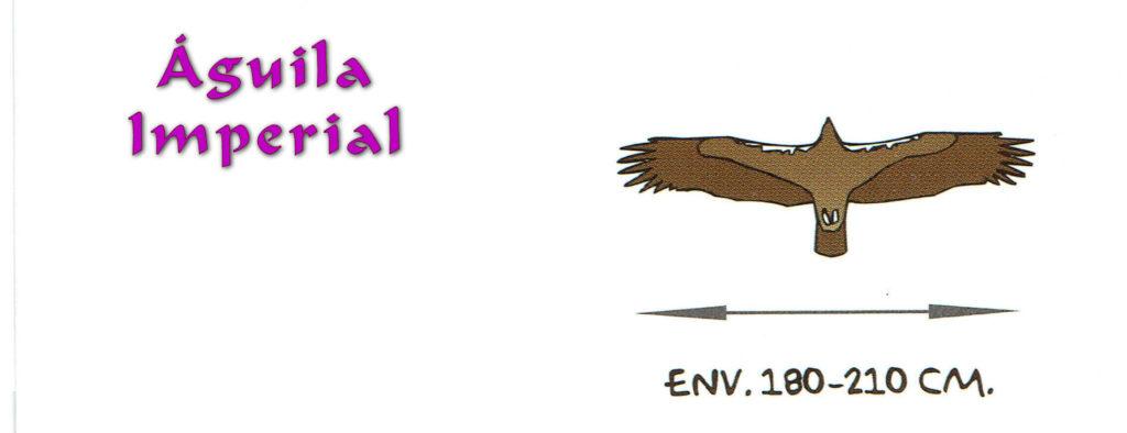 02.1 Aguila Imperial