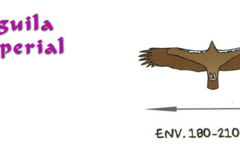 02.1-Aguila-Imperial