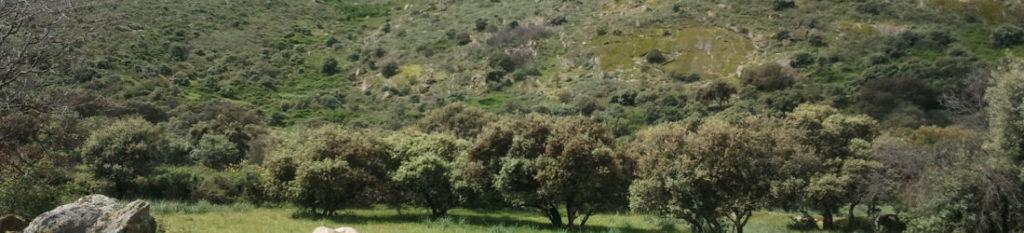 Rural Home in Trujillo